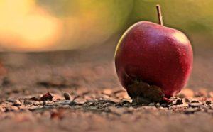 背景がボケて印象的に写った地面のリンゴ