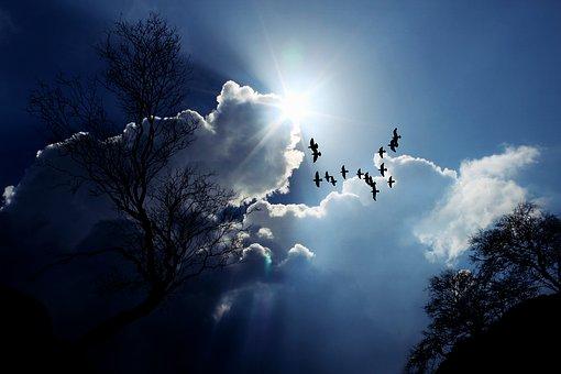 雲と眩しい太陽を背景に天高く飛ぶ鳥の逆光のシルエット