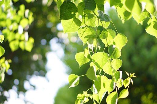緑の若葉に差し込む木漏れ日